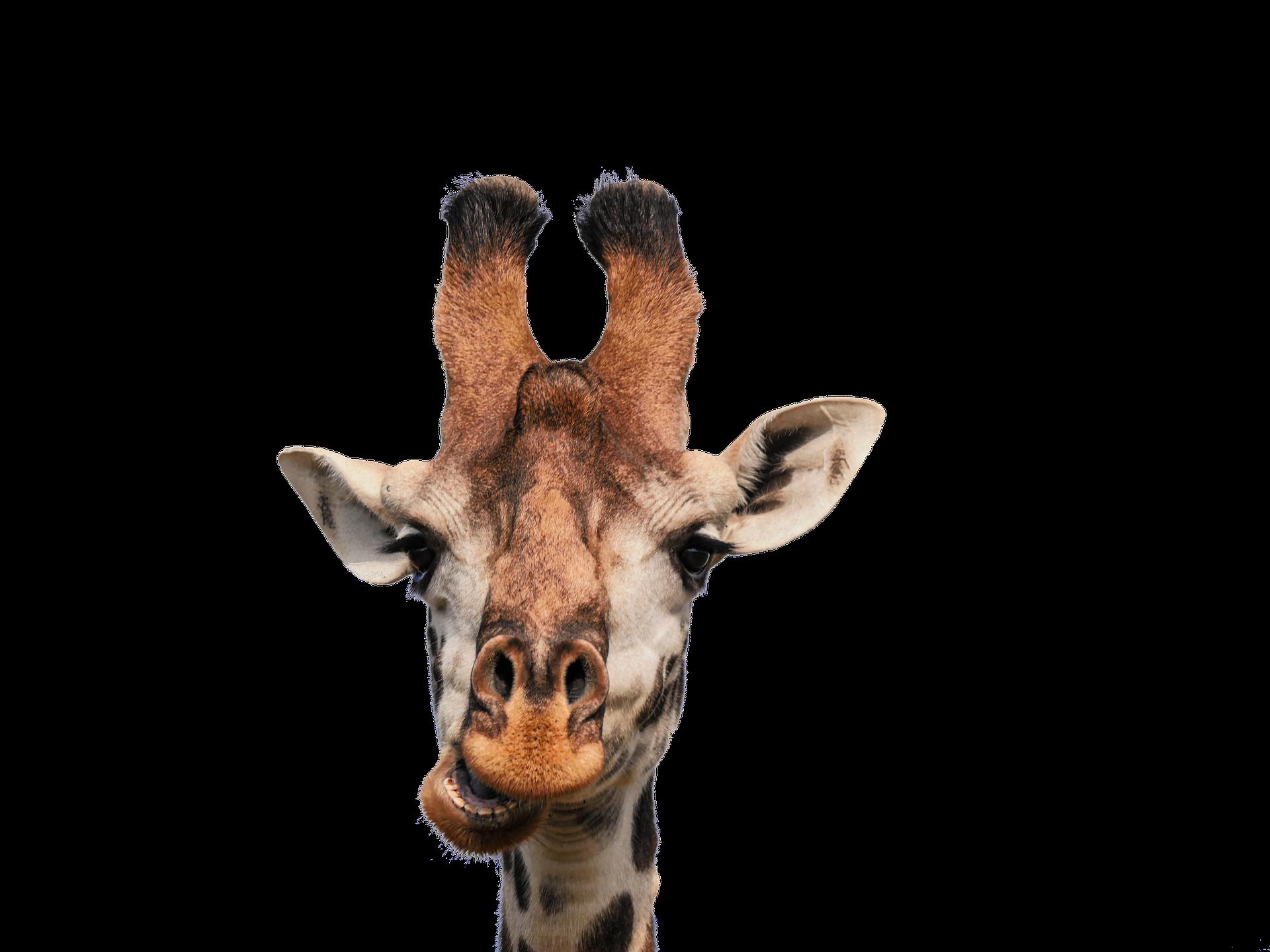 giraffe cyberformation